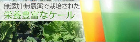無添加・無農薬で栽培された栄養豊富なケール